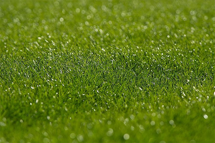 【個人的願望】優秀なGKを育てるためには芝生化を